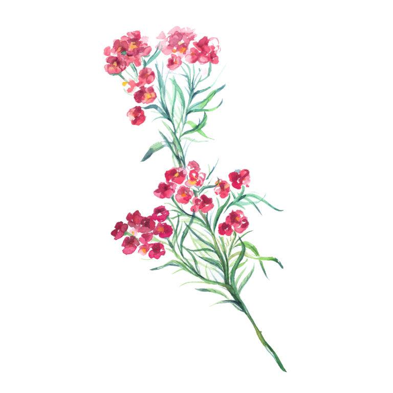 wedding flowers watercolor