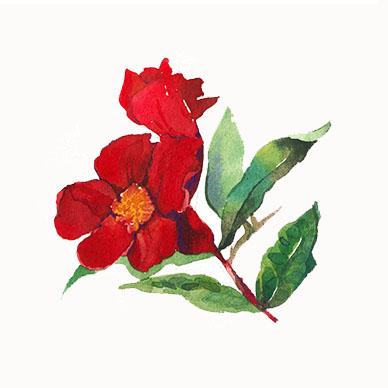 pomegranade flower detail