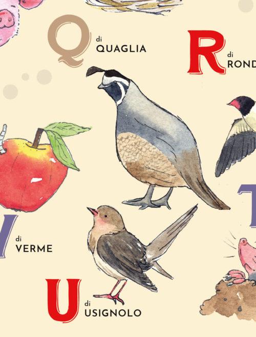 birds illustration detail