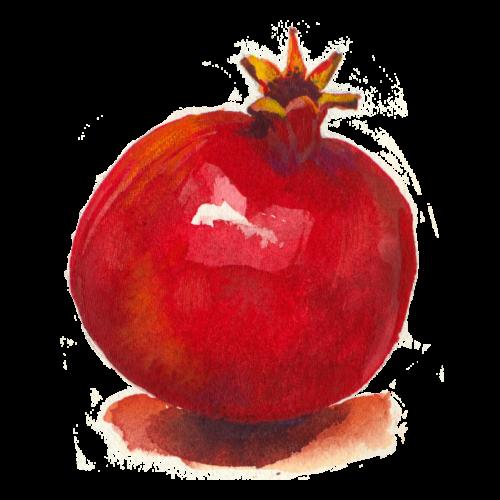 pomegranate fruit watercolor