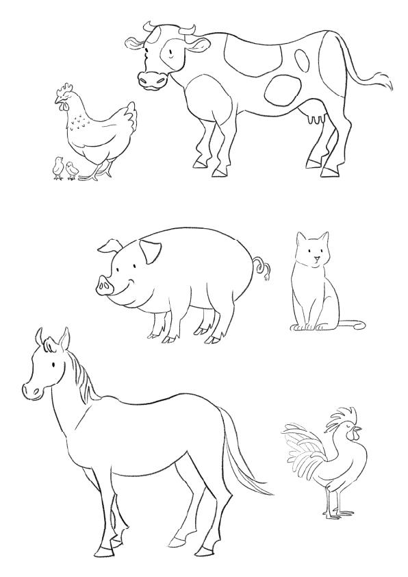 illustrazione animali linda pellicanò