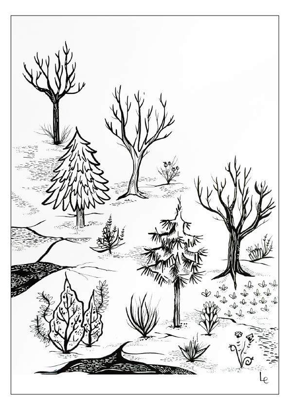 woods drawing
